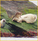 seal watch tours family events and things to do newport ri